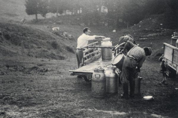 raccolta latte in Barricata Casearia Monti Trentini