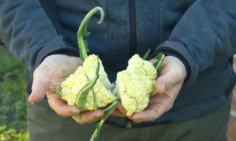 Broccolo-di-torbole3