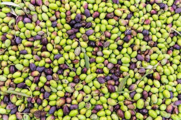 OlioCru olive del Garda
