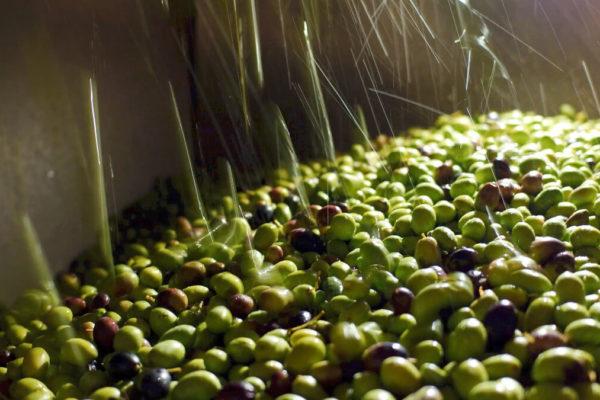 lavaggio olive Agraria Riva DAO