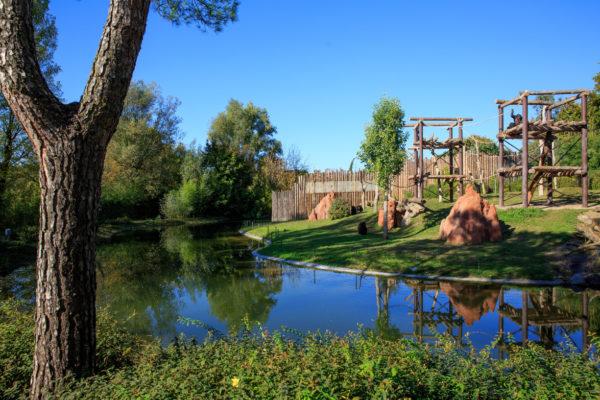 area scimpanzè - sentieri africa - faunistico Parco Natura Viva