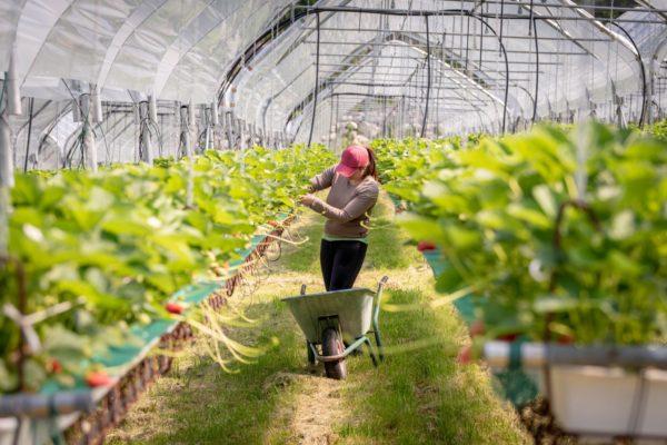 azienda agricola Zanetti Gruppo DAO 2