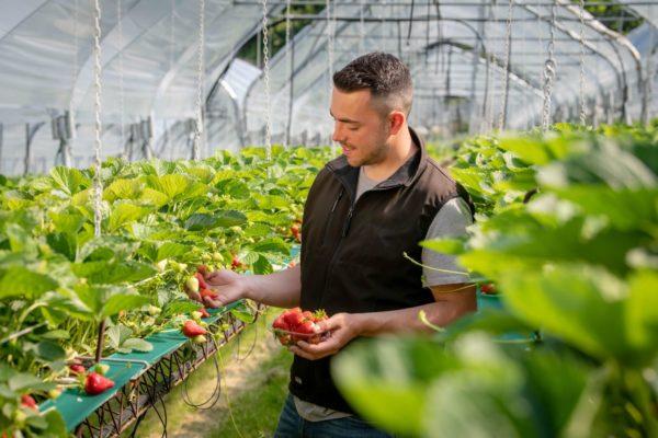 azienda agricola Zanetti Gruppo DAO 5