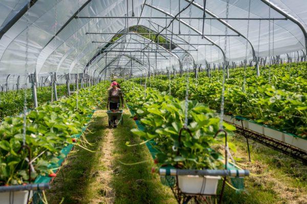 azienda agricola Zanetti Gruppo DAO 8