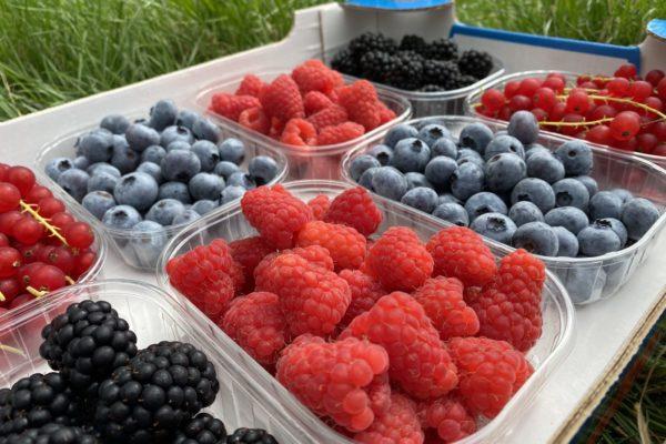 azienda agricola Zanetti piccoli frutti 2