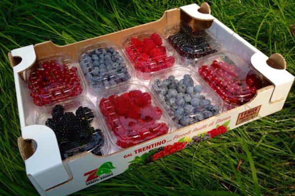 azienda agricola Zanetti piccoli frutti