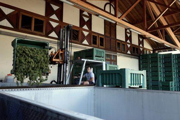 produzione vino Cantina di Cortaccia produttori locali DAO